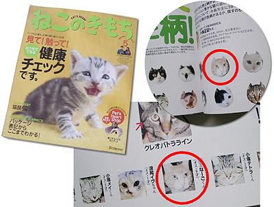 猫の気持ち:雑誌モデルデビュー