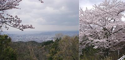 グリーンラインから望む福山の街
