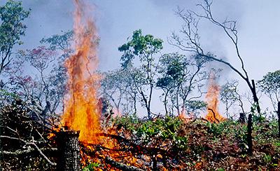 焼き畑による開墾:タンザニア
