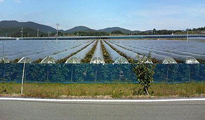 広大な葡萄畑02