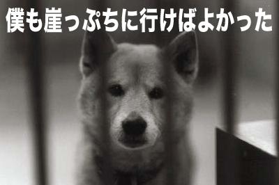 保健所の犬