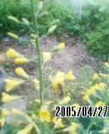 050427_0730~01s.jpg
