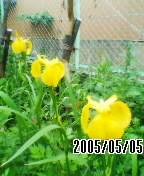 050505_1706~01.jpg