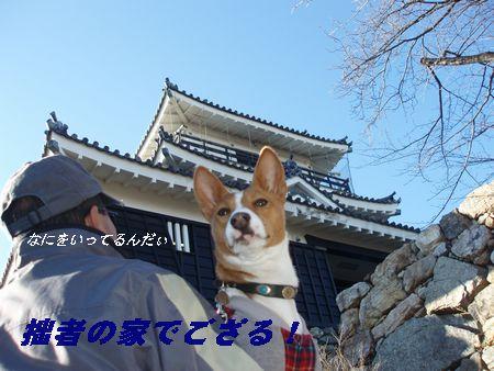 うそです!浜松城です。