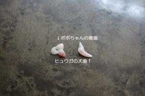 IMGP5436.jpg