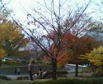養老公園.3
