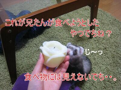 IMG_4187.jpg