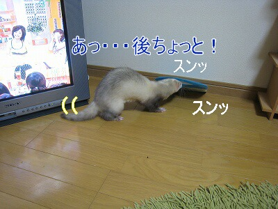 IMG_4409.jpg