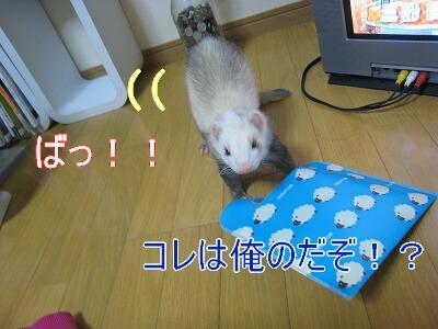 IMG_4413.jpg