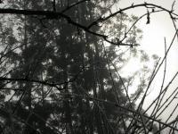 IMG_0004-2.jpg