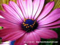 IMG_1707-3.jpg
