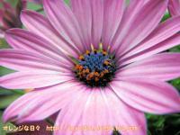 IMG_1753-3.jpg
