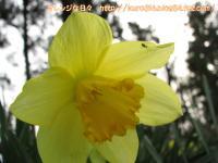 IMG_1787-3.jpg