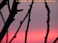 IMG_1800-3.jpg