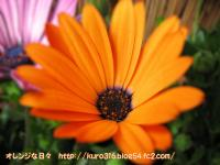 Image016-4.jpg