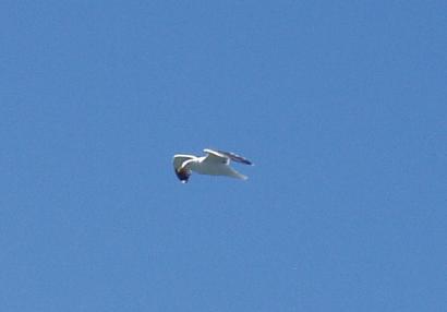 bird7061.jpg