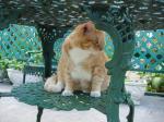 cat3_ks.jpg