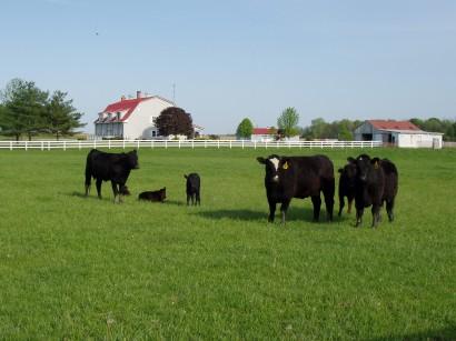 cow_all.jpg