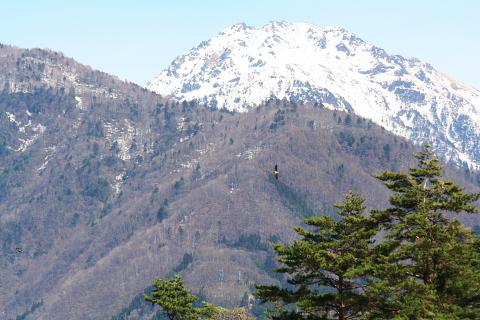 20060428-62.jpg