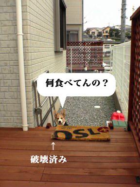 DSC01538.jpg