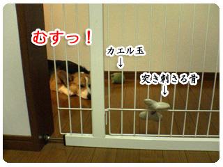 DSC01893.jpg