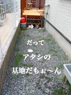 IMG_1772.jpg