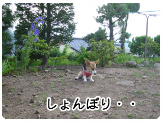 IMG_2684.jpg
