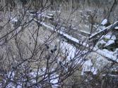 20070308B.jpg