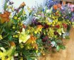 flowers155000.jpg