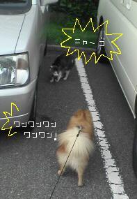 20060624_91616.jpg