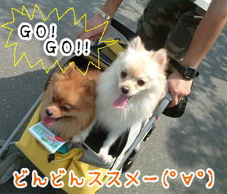 gogopp.jpg