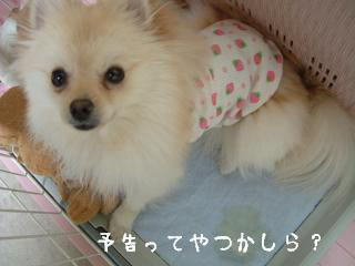 ichigococo.jpg