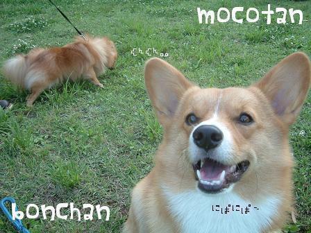 mocobon.jpg