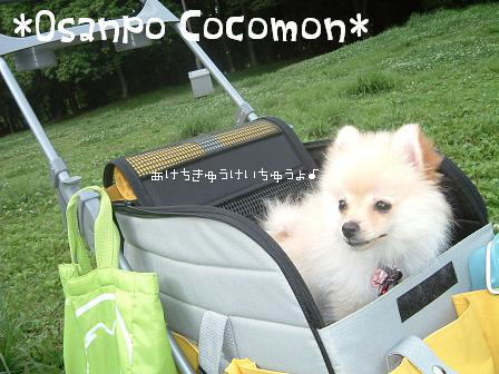 newcocomo.jpg