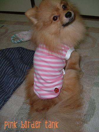 モデル犬なの!