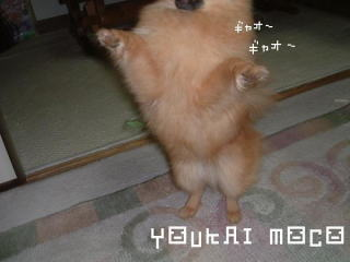 youkaimoco2.jpg