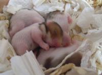 baby-18-0915.jpg