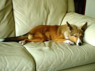 ソファーでうたた寝