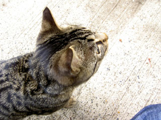 cat2_s.jpg