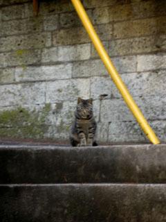 cat_s.jpg