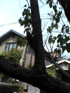 2005.7 実家の庭のセミ.JPG