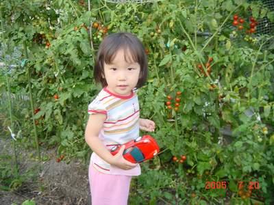 2005.7.20 プチトマト摘み♪.JPG