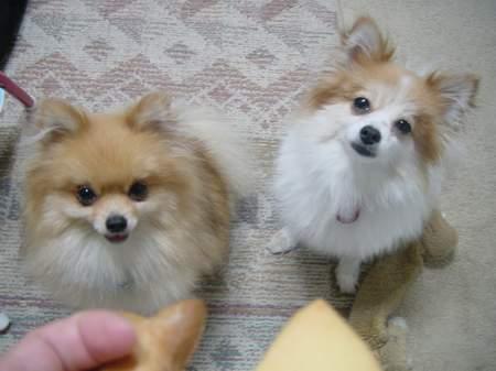 2005.7.27 クッキーちょうだい!.JPG