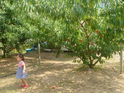2005.8.5 桃の木を後ろにしてののんちゃん.