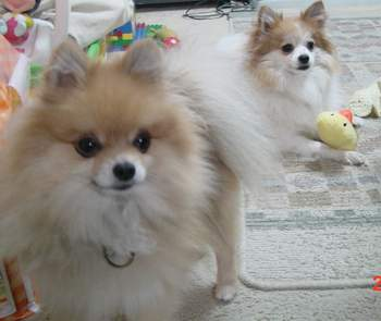 2005.12.24 おもちゃ大好きももケン.JPG