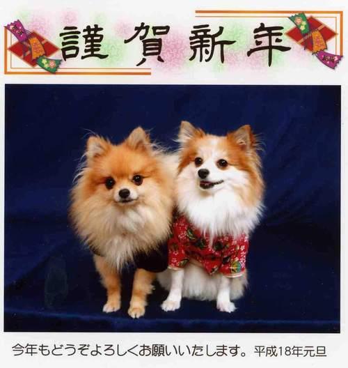 2006年1月 ももケンブログ用年賀状.JPG