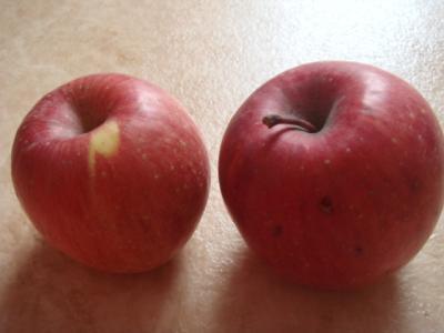 11.23 bunさんのりんご
