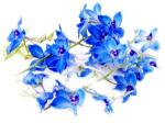 flower19_300x225s.jpg