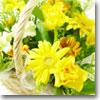 flower23_100b.jpg