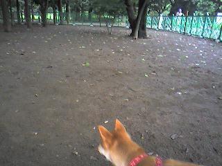 城北公園つづき